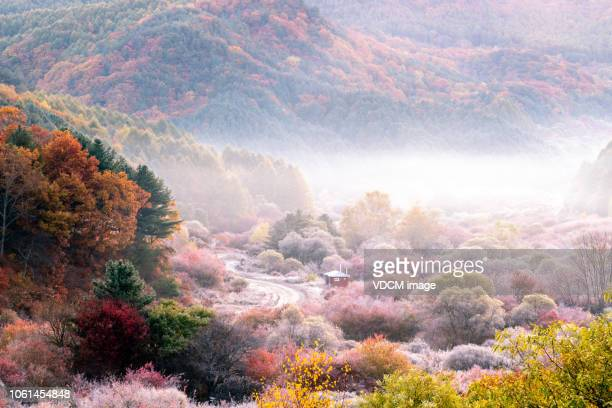 vd708 secret garden dans le brouillard - corée du sud photos et images de collection