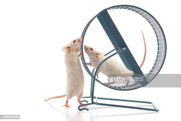 Secret Meeting at the Mouse Wheel