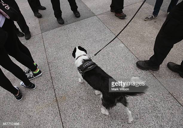 Secret Service K9 patrols around the tourist in front of White House October 23 2014 in Washington DC Last evening Dominic Adesanya of Bel Air...