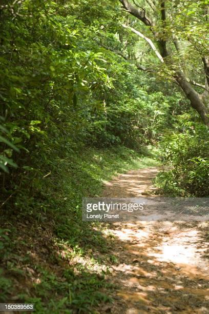 Section of Lantau Trail.
