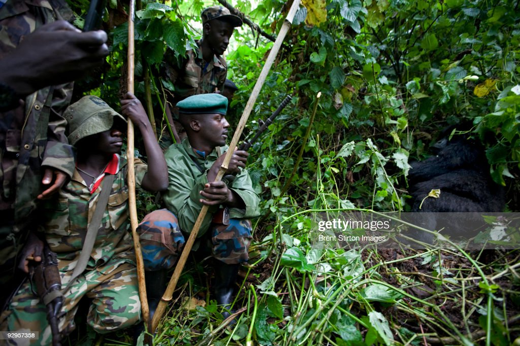 A section of men from one of General Nkunda's CNDP hilltop bases in the occupied Mikeno Sector of Virunga National Park make their way to find gorillas along with CNDP appointed Mikeno Section Warden Kanamahrazi, (wearing a white shirt with green patches and animal designs). The Ranger doing the actual gorilla contact is Shyamba Kayitare. He is one of the ICCN Rangers who remained in the area when CNDP forces took Mikeno in the September 2007. On this trip the CNDP rebels and the warden and rangers had a brief encounter with the Kabrizi family of Gorillas who appeared to have suffered no ill health or loss of life due to the conflict and subsequent occupation of the Park by Nkundas forces. CNDP have opened their own version of ICCN, the Congolese Parks service, and created a split between Rangers who remained in the area after occupation through war and the Rangers who left the area on the instructions of ICCN Kinshasa. CNDP have colluded with and appointed returned Tutsi Warden Kanamaharazi, who claims that he is now the chief warden of Mikeno section, home of the mountain Gorilla population of DRC. Nkunda states that he is all for conservation and says that he believes that Virunga National Park is an important resource for the Congolese people which must be preserved. He invited the return of ICCN with full transparency and a promise of support from his men who are currently occupying the Mikeno sector, the gorilla sector of Virunga. This contradicts the actions of his troops in the area who do not want the former ICCN players to return but rather to be their own conservation force in the area. They do however want the full support of ICCN Kinshasa with salaries and full equipment. It was also discovered that the road into Bukima, a key gorilla area, has purportedly been mined.