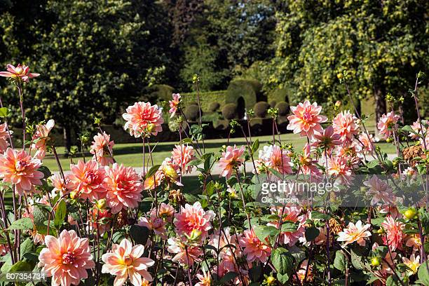Section of Queen Margrethe's new perennial garden at Fredensborg Palace in Denmark on September 16, 2016. The Queen received the garden as a birthday...