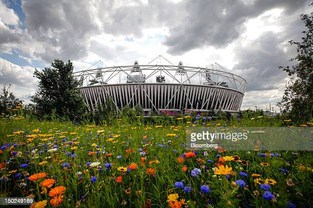 Section of the Olympic Park sown with wild flowers is seen in front of the Olympic stadium during the London 2012 Olympic Games in London, U.K., on...