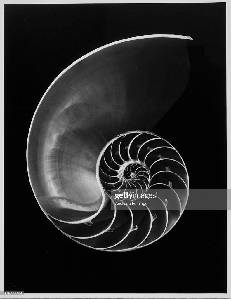 Sectioned nautilus shell, 1977.