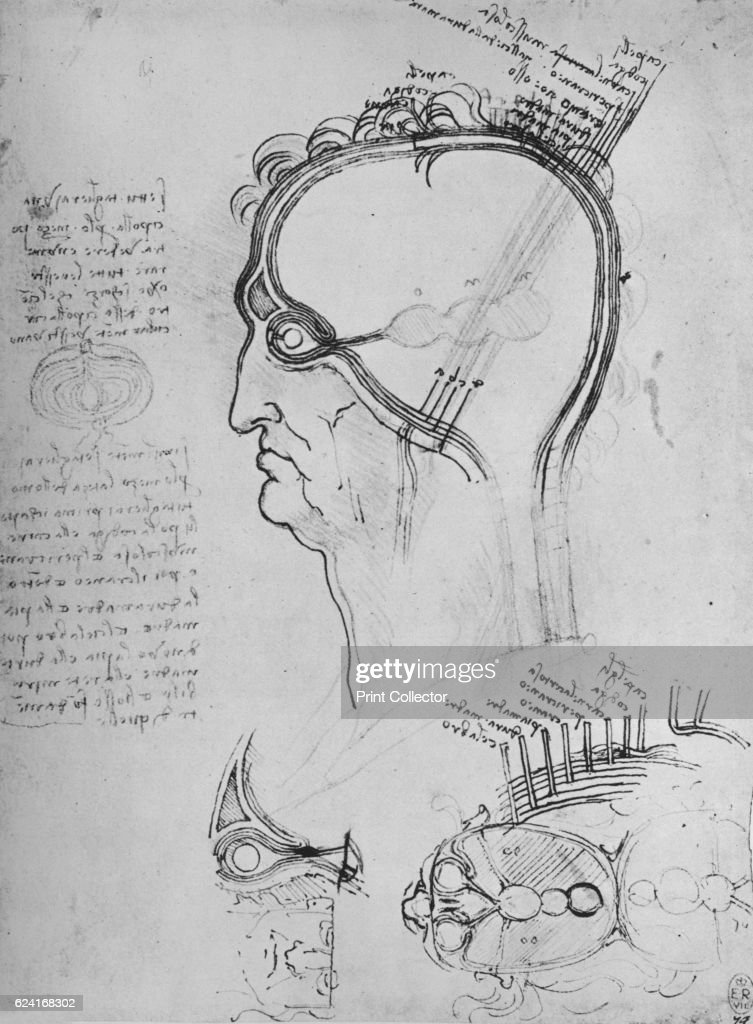 Sections of a Man\'s Head Showing the Anatomy of the Eye, Etc ...