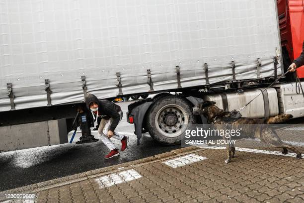 Security dog barks after detecting migrants hidden under a lorry headed to Ireland, at the port of Cherbourg, northwestern France, on February 2,...