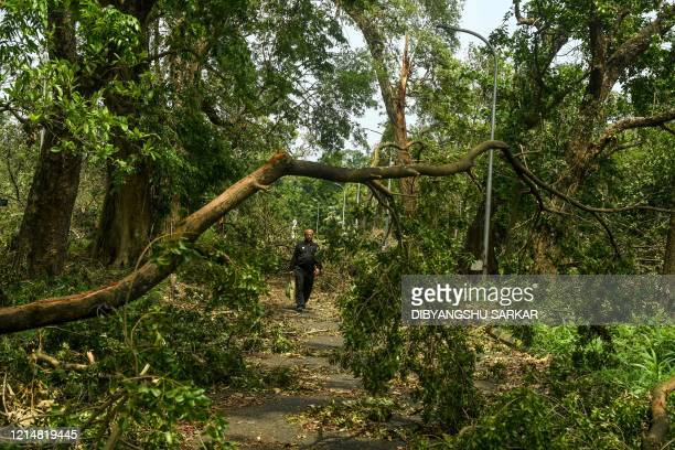 A security guard patrols in an alley covered with fallen trees following the landfall of cyclone Amphan at the Indian Botanical Garden in Kolkata on...