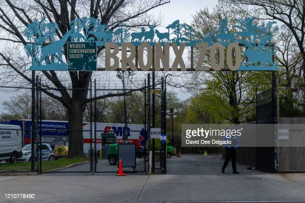 A security guard stands by an entrance to the Bronx Zoo on April 23 2020 in New York City Seven more big cats have reportedly tested positive for the...