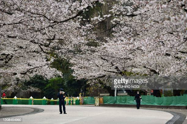 Security guards patrol at a closed cherry blossom viewing spot in Ueno park in Tokyo on March 28 amid concerns of the COVID19 coronavirus
