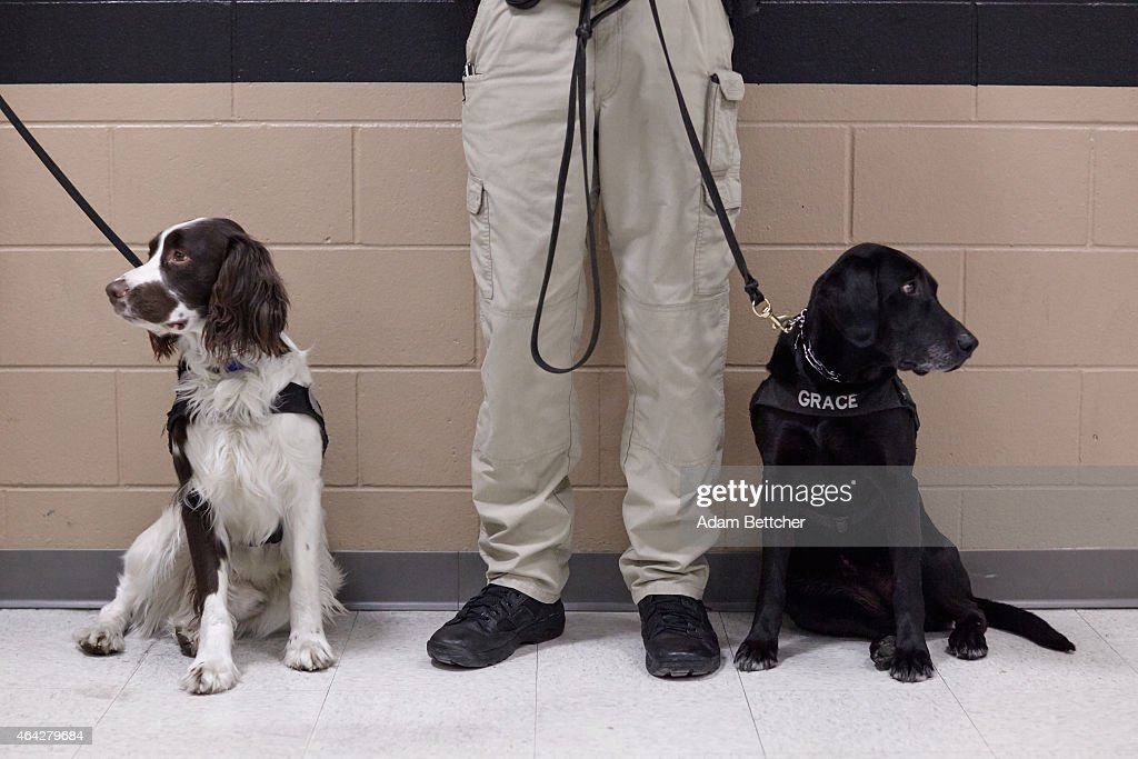 Security K9 teams are presented to the media during a tour of the Mall of America security systems on February 23, 2015 in Bloomington, Minnesota. In a newly released video, Somali militant group al-Shabaab called for terror attacks at a number of sites, including Mall of America, the largest shopping mall in the United States.