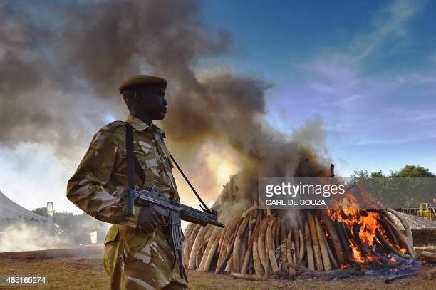 A KWS security officer stands near a burning pile of 15 tonnes of elephant ivory seized in Kenya at Nairobi National Park on March 3 2015 15 tonnes...
