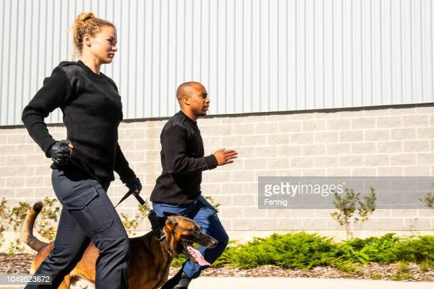 k-9 security professionals respond to an alarm. - police dog stock photos and pictures