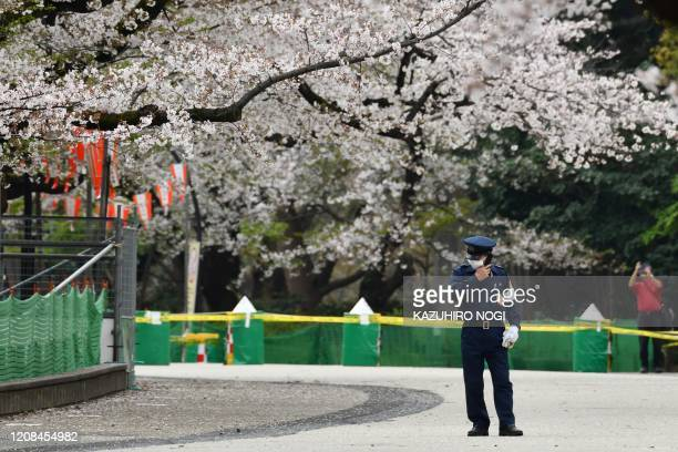 A secury guard stand at a closed cherry blossom viewing spot in Ueno park in Tokyo on March 28 amid concerns of the COVID19 coronavirus