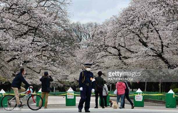 A secury guard stands at a closed cherry blossom viewing spot in Ueno park in Tokyo on March 28 amid concerns of the COVID19 coronavirus