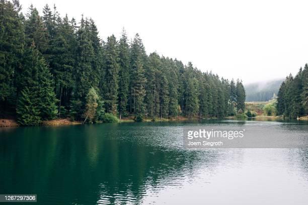 see im wald - foresta temperata foto e immagini stock