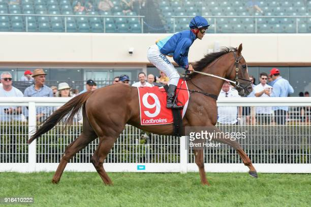 See Me Exceed ridden by Michael Walker head to the barrier before the Kevin Hayes Stakes at Caulfield Racecourse on February 10 2018 in Caulfield...