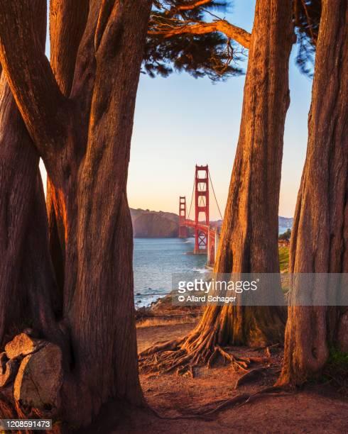 see through to golden gate bridge san francisco - san francisco california stock pictures, royalty-free photos & images