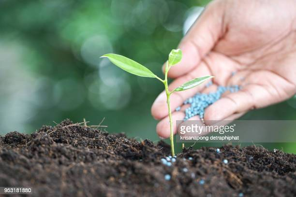 seed and planting concept with Male hand watering young tree over green background,Growth of business,concept,business concept.