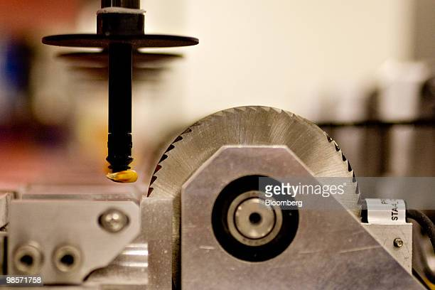 A seed corn kernel is held in position near the blade of a chipping machine which will remove a small piece of the seed for testing inside a Monsanto...