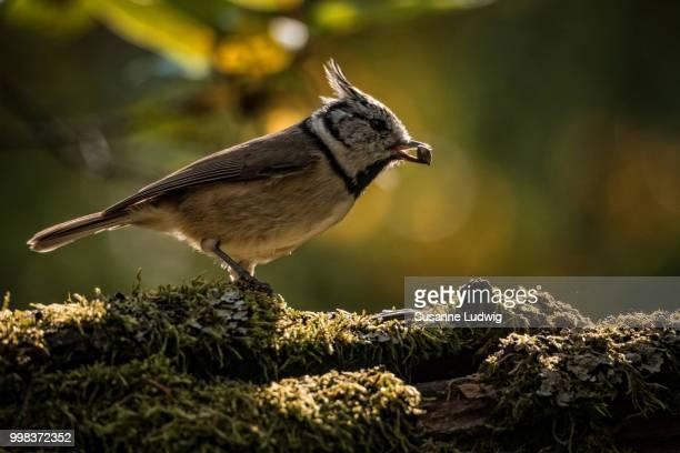 seed in beak