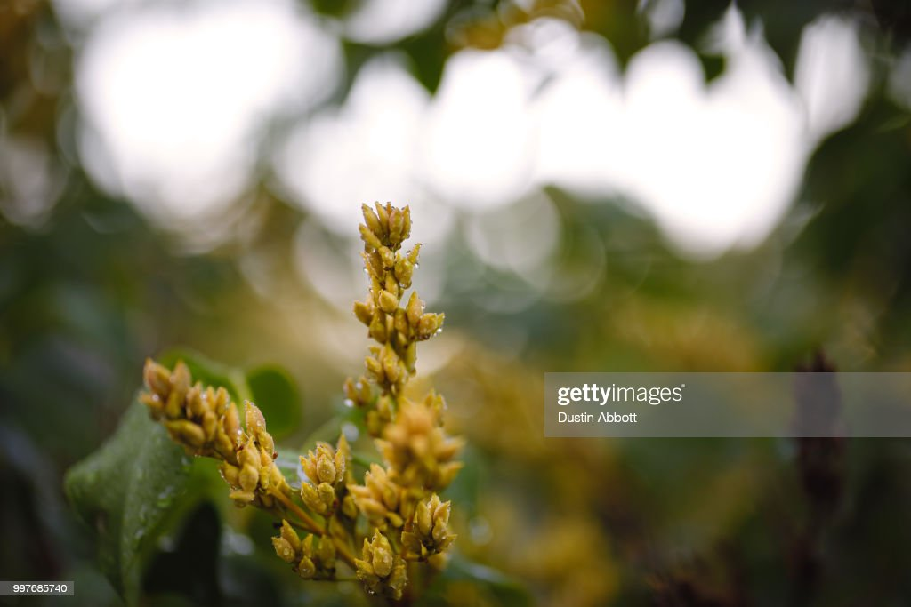 Seed Pods : Stock Photo