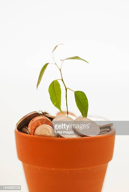 Seedling growing in pot of coins