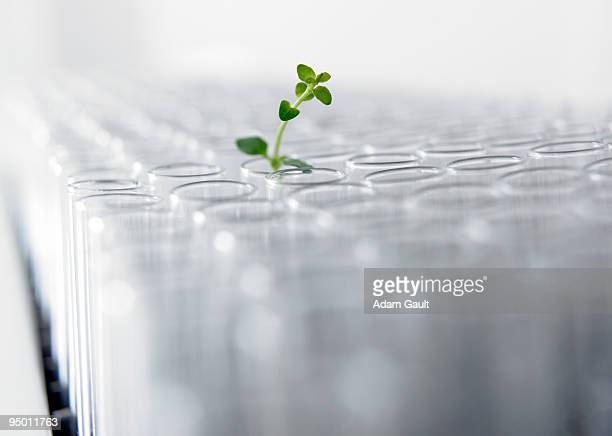 seedling growing in test tube - biochemistry stock pictures, royalty-free photos & images