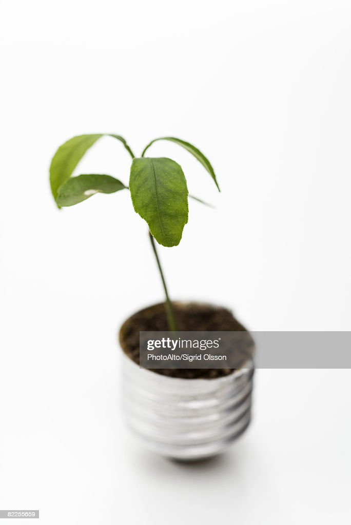 Seedling growing out of light bulb base : Stock Photo