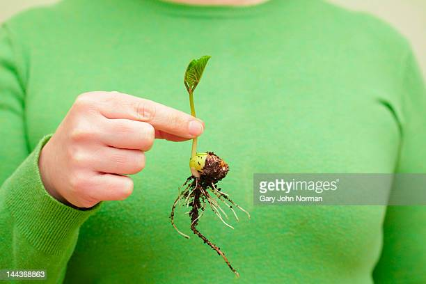 seedling held in fingertips
