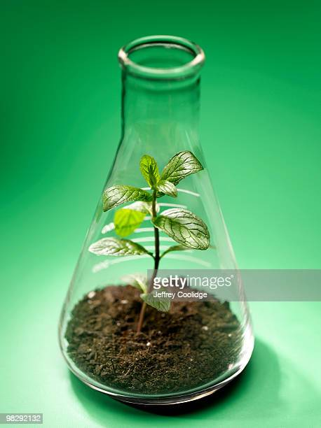 Seedling in Beaker
