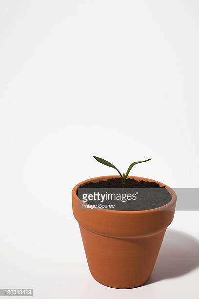 Seedling in plant pot on white background