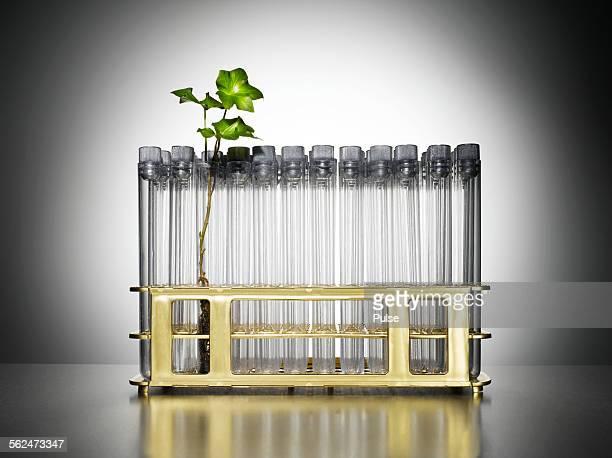 Seedling in test tube
