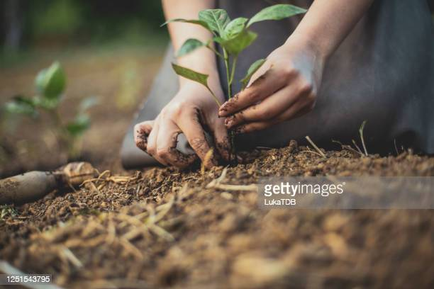 """seedling moving to """"a bigger house"""" - environmental issues stock pictures, royalty-free photos & images"""