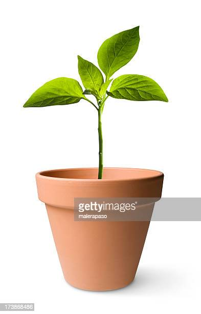 seedling - pot plant stock pictures, royalty-free photos & images