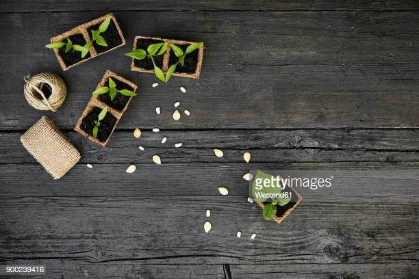Seedlings and seeds on dark wood