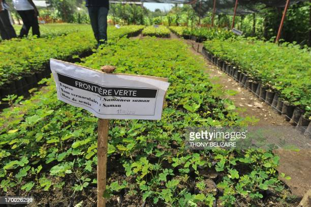Seedlings are ready for planting as Dominican President Danilo Medina meets with Haitian President Michel Martelly to inaugurate a reforestation...