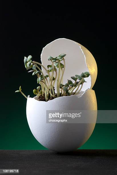 Seedlings Growing Out of Cracked Egg Shell