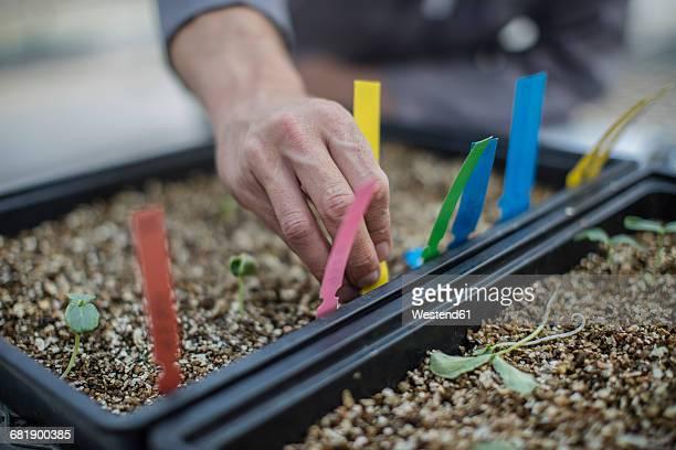 Seedlings in plant box