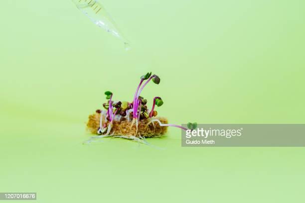 seedlings on fertile soil and pipette. - umweltschutz stock-fotos und bilder