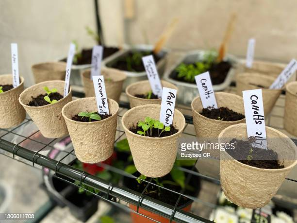 seedlings planted in pots and labelled - new stock pictures, royalty-free photos & images