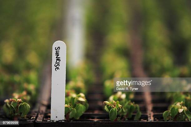 Seedlings with sunrise on the name tag
