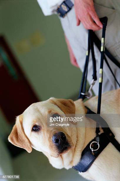 Seeing Eye Dog and Owner
