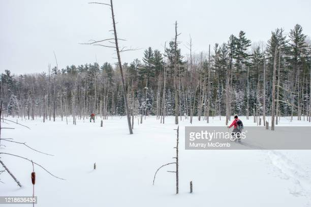 seeking solitude snowshoeing in the wilderness - murray mccomb stock pictures, royalty-free photos & images