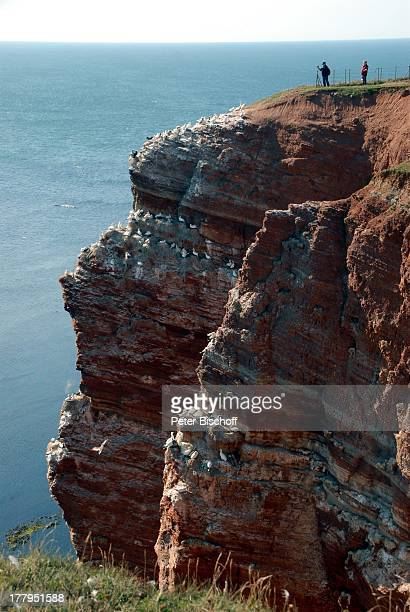 Seemöwen auf Lummenfelsen Klippenrandweg Insel Helgoland SchleswigHolstein Deutschland Europa Nordsee Felsen Reise