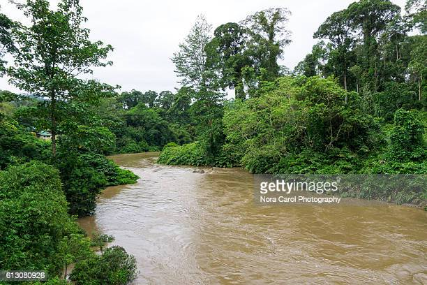 segama river in danum valley - dipterocarp tree stock pictures, royalty-free photos & images