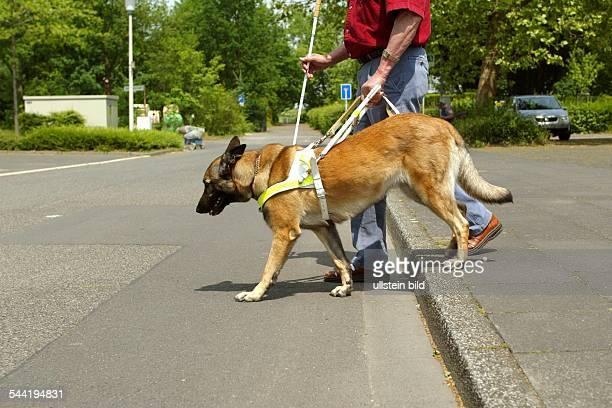 Blinder Mann mit Blindenhund beim Ueberqueren der Strasse