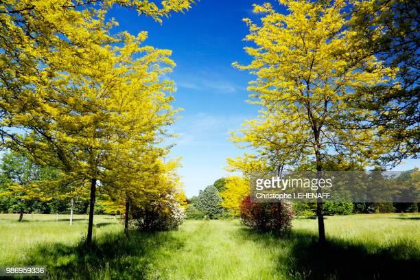 Seine et Marne. Gretz Armainvilliers. The arboretum in spring.