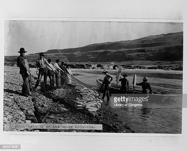 Seining on the upper Columbia Artist Printer Publisher Copyright claim Medium Photo Date co Oct 30 1906 Source spffishing 81224/