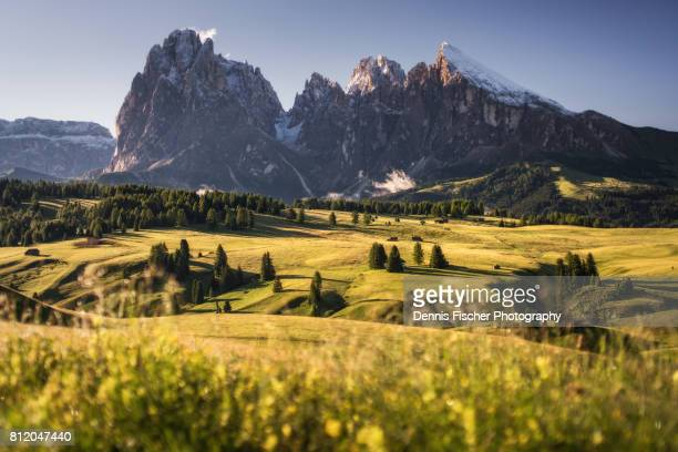 Seiser Alm - Alpe di siusi - view in the Dolomites, Italy