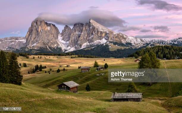 seiser alm, dolomite alps, italy, europe - ruhige szene stock pictures, royalty-free photos & images